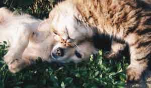 pets caan help depression and mental illnesses amongst people